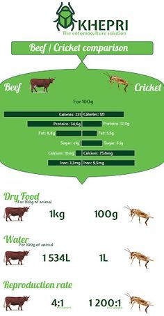 ENTOMOPHAGY VISUALS