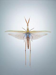 Jonathan Gregson's Illuminations on Entomophagy
