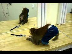 ~ Моя  Вселенная ~: Мавпочка перед люстерком.