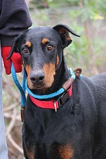 90 Best Adoption Puppies Images Adoption Foster Care Adoption
