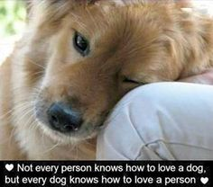 Quotes For Dog Lovers - Bing Images - Click image to find more Quotes Pinterest pins