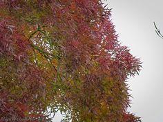 https://flic.kr/p/yZdYKA | Herbst | Herbst