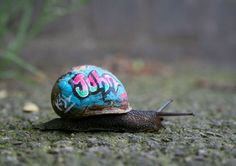 Pimping Out Snail's Shells to Prevent Them Getting Squashed