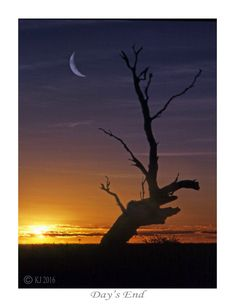 Day's End, PRINT FOR SALE, Australian Outback, landscapes, sunrises, sunsets, tree silhouette, dead tree, nature photography, australian landscapes,