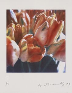 He's best known for his chalk paintings, but in his later work Cy Twombly created intimate, saturated, blurred views of flowers and everyday objects. Tulips were his favorites. He died in 2011 and would have been 85 today, April 25. Tulips III no. 2,...