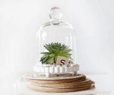 Miniature Wonderland Cloche Bell Jar Terrarium Kit by hammersheels, $14.99