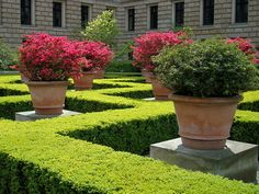 GardenDesigns+more: Potted Plants = Container Garden Container Plants, Container Gardening, Pathways, Potted Plants, Stepping Stones, Entrance, Centerpieces, Outdoor Decor, Pot Plants