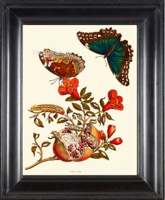 BOTANICAL PRINT Sibylla 8x10 Botanical Art Print 10 Beautiful Butterfly Pomegranate Fruit Red Flowers Butterflies Home Decor