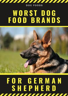 4 Worst Dog Food Brands You Can Feed Your German Shepherd! Ol Roy, Dog Food Brands, Large Dog Breeds, Dry Dog Food, Dog Owners, Brand You, Dog Food Recipes, Dogs And Puppies, Surfing