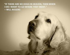 Quotes If there are no in heaven, then when I die I want to go where they went.If there are no in heaven, then when I die I want to go where they went. All Dogs, I Love Dogs, Puppy Love, Dogs And Puppies, Doggies, Corgi Puppies, Golden Retrievers, Game Mode, Dog Heaven