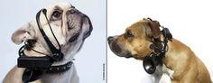 ¡Actualidad! ¿Qué piensa tu perro? Ahora podrás saberlo con el traductor para perros de NoMoreWoof.  #perro #traductor #NoMorewWoof