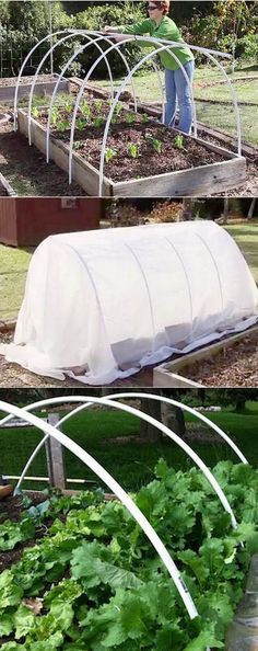 Ultimate collection of THE BEST tutorials on how to build amazing DIY greenhouses, hoop tunnels and cold frames! Lots of inspirations to get you started! - A Piece of Rainbow Vegetable Garden, Plants, Garden Beds, Organic Gardening, Diy Greenhouse, Plastic Bottle Greenhouse, Diy Garden, Garden Structures, Garden
