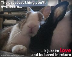Rabbits can teach us a lot about love (with a little help from Eden Ahbez - thanks for the quote)