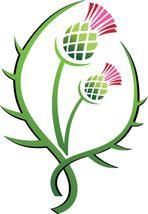 Thistle illustration floral emblem of Scotland