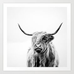 Buy portrait of a highland cow by Dorit Fuhg as a high quality Art Print. Worldwide shipping available at Society6.com. Just one of millions of products…