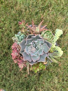 Succulents, Landscaping, Bird, Outdoor Decor, Plants, Home Decor, Decoration Home, Room Decor, Birds