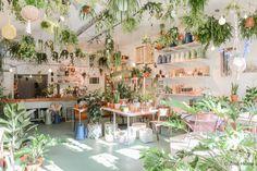 TALLER DE CALLE Blog Verde: Amsterdam / Wildernis, selva salvaje, pero urbana /