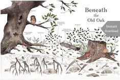 Nature Art Poster - Beneath the Old Oak - Nature Details - School Room Wall Art - 12 x 18 Poster - Montessori, Educational, Nature Study Old Oak Tree, Nature Posters, Nature Table, Beautiful Posters, Nature Study, Patterns In Nature, Botanical Prints, Watercolor Paintings, Gardens