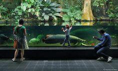HUUUGE !!!!! Aquário de Berlim, aquário plantado para jumbos by vincenzo di nuzzo