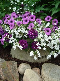 Purple morning glory and white flowers. the white flowers could be something like bindweed. the small white flowers could look pretty with red roses in a wedding bouquet Purple And White Flowers, Container Flowers, Flower Garden, Purple Flowers, White Flowers, Plants, Flower Planters, Flowers, Container Gardening