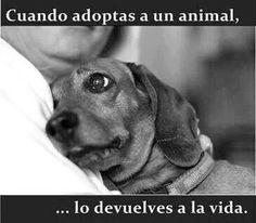 Yes! #AdoptaNoCompres #perros #noalmaltratoanimal