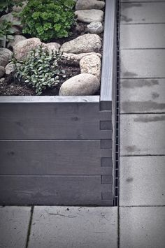 Chocolate Mint grows amongst River Stones in a Wooden Raised Garden Bed
