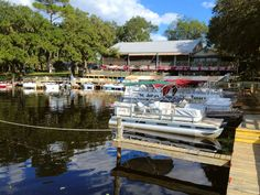 """This is the Highbanks Marina and Swamp House Grill in DeBary, Florida, upon which I based Miller's Marina & the Crab Shack in my novel, """"Swamp Ghosts."""" A great place for lunch, with spectacular scenery. And afterward, take an EcoTour on Captain Jeanne Bell's boat, the Naiad. When you get back to civilization, be sure to read """"Swamp Ghosts,"""" available on Amazon May 1, 2014."""