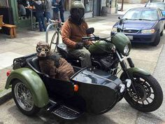 Dog in Motorcycle Sidecar