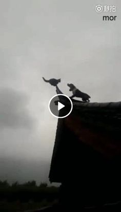 Video Battle cat and dog Cute Cats And Kittens, I Love Cats, Crazy Cats, Kittens Cutest, Jokes Videos, Funny Animal Videos, Videos Funny, Cute Baby Animals, Funny Animals