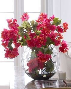 bouganvillea I love this in my living room it adds so much color.  My plant outside is huge