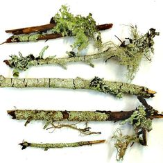 I've started a bit of a collection of lichens and moss at the cabin in Bend.  Now...what to do with them?