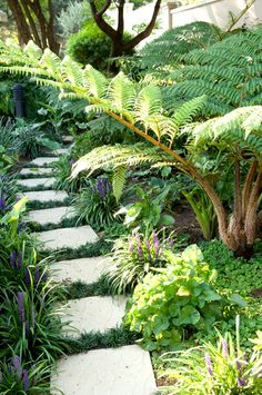 Winding garden pathway flanked by Liriope Muscari and Viola's
