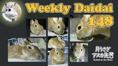 Weekly Daidai 148