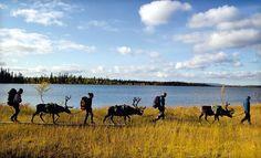 Lappland: die Gletscherland der NordlichterLappland Land der Gletscher und den SamenLappland: Land der Gletscher und das SamiElegir Volk als Lappland ...