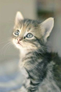 Pin By Lita Tin On CATs Pinterest Cat Animal And Kitty - 28 cute baby animals will melt heart