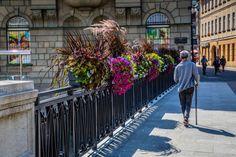 Jak ukwiecić mosty? Skrzynie kwiatowe do zadań specjalnych - Inspirowani Naturą Flower Boxes, Flowers, Cities, Sidewalk, Street View, Window Boxes, Planter Boxes, Side Walkway, Walkway