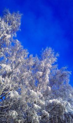 Winter in Finland  Photo by Emilia Laakso