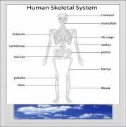 Basic Skeleton Digitally Printed Photo Roller Blind