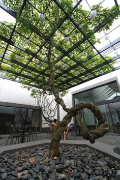 Tree canopy Tree Canopy, Walk In The Woods, Greenery, Landscape, Scenery, Canopy, Corner Landscaping