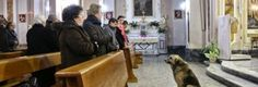 Loyal dog attends mass every day at church where owner's funeral was held waiting for her to return. This is how loyal dogs are. Italian Dogs, Loyal Dogs, Blood Pressure Remedies, Loyal Friends, Waiting For Her, Doge, Mans Best Friend, Dog Owners, Cute Animals