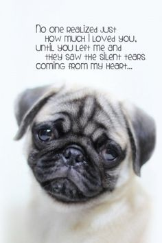 Just not fair.  As someone who helps to rescue pugs this kills me.