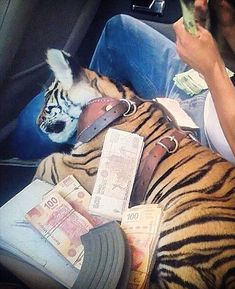 A tiger cub and high denomination bank notes are used to show off wealth