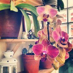 "21 Gostos, 12 Comentários - Lara Mafalda   myBelovedCraft (@laramafalda) no Instagram: ""Droping #phaleanopsis #orchid #flower #colors #instamood #instadaily #igmasters #igersporto…"""