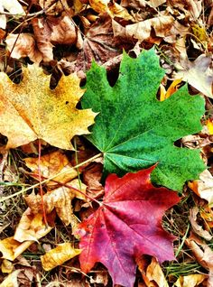 #fall #leaves #photography Changing Leaves, Bring Them Home, Fall Leaves, Fall Season, Cool Pictures, Art Projects, Autumn, Seasons, Places
