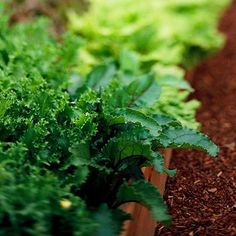Make Sure You Mulch Make maintaining your garden easier with a layer of mulch. An inch or two of mulch helps your soil hold moisture during hot, dry weather. It also stops most weeds from sprouting.
