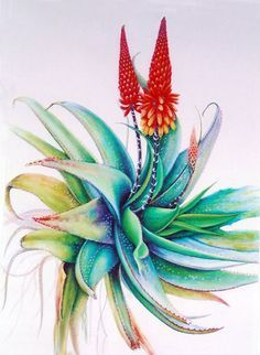 Botanical Artists of Canada: art_gerbary — LiveJournal Cactus Painting, Cactus Art, Botanical Drawings, Botanical Art, Plant Illustration, Botanical Illustration, Watercolor Flowers, Watercolor Paintings, Protea Art