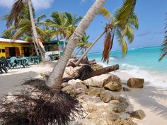 Gwen's Reggae Bar and Grill | Shoal Bay East | Anguilla