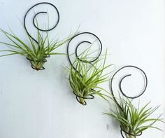 wall mount air plant display idea -3