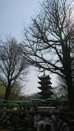 本日の上野動物園 上野動物園の中にある旧寛永寺五重塔と桜の木 桜はまだ開花していませんでしたが皆さんお花見気分でお弁当を広げたりビールを楽しんだりしていましたよ 予報では来週くらいに桜が咲くそうですのでぜひ遊びに行ってみてください()/ tags[東京都]