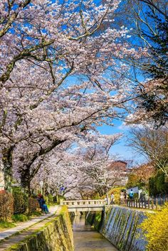 The Philosopher's Path, Kyoto | 10 Reasons Why You Must Forget Europe and Visit Japan During Spring Season